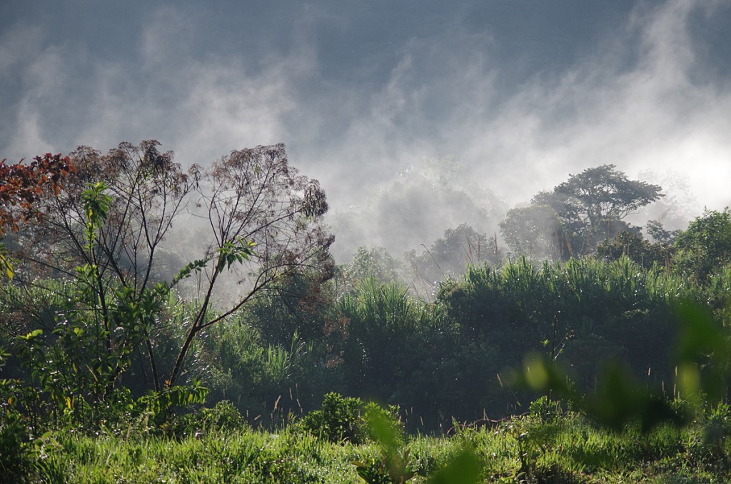 The Ecuadorian cloud forest at Mindo.